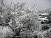 2010_011300925